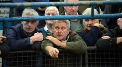 Martin Gleeson and PJ Creggs, Roscommon take in the action at Tuam Mart's 54th annual Cattle show and sale. Photo: Ray Ryan