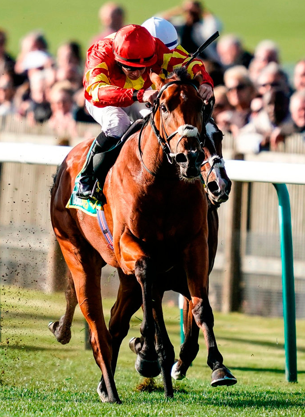 Family affair: Joseph O'Brien enjoyed his first Group One winner in England when Iridessa was the surprise 14/1 winner of the bet365 Fillies' Mile at Newmarket yesterday. She looked to have her work cut out when battling Pretty Pollyanna and Aidan O'Brien's 5/2 favourite Hermosa inside the final furlong. Iridessa, in the hands of Wayne Lordan, quickened up best and was always doing enough to hold Hermosa at bay by a length and a half. Photo: Alan Crowhurst/Getty Images