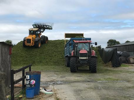 Third-cut silage going into a pit at Gurteen College.