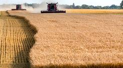 Even as farm debt continues to grow, the performance of national agricultural banks remains generally solid, the bank said.