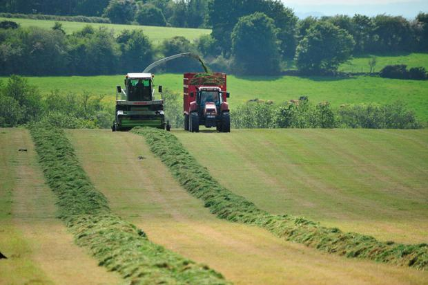 The difference in dry matter between silage made during the summer drought and recently made autumn silages, is as high as 40pc