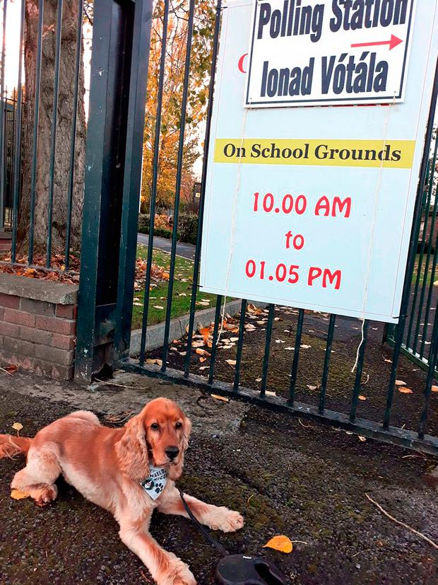 Handout photo taken with permission from the Twitter feed of @stokesofdublin of his dog Hugo waiting outside a polling station in Ireland, as the country goes to the polls to vote in the Irish presidential election. Bernard Harbor/PA Wire