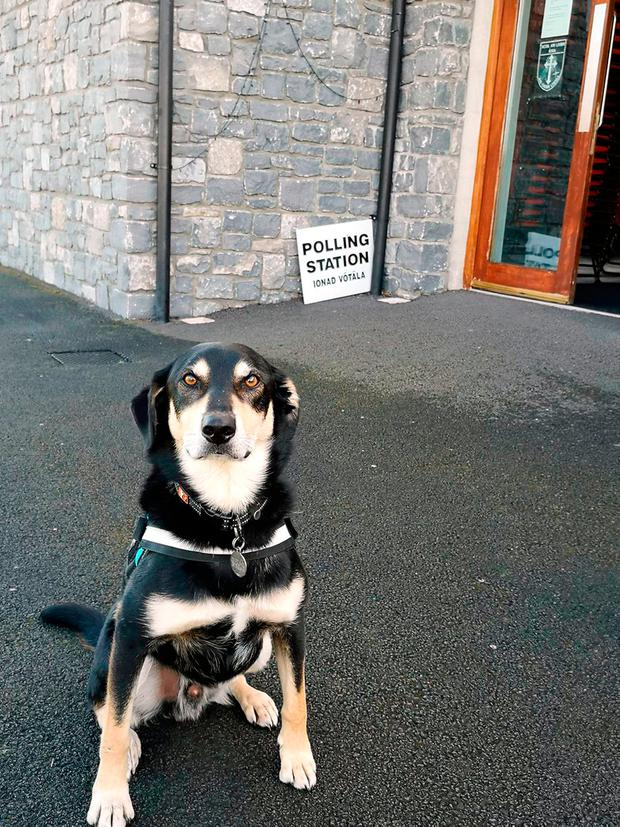 Handout photo taken with permission from the Twitter feed of @SilentFugitive of his dog Diesel waiting outside a polling station in Ireland, as the country goes to the polls to vote in the Irish presidential election. JoeLaff/PA Wire