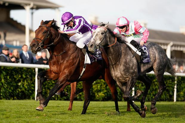 Donnacha O'Brien and Magna Grecia (left) win the Vertem Futurity Trophy Stakes at Doncaster. Photo: Getty Images