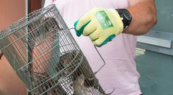 Marmion Court resident Paul Maguire with caught rats. Picture: Colin O'Riordan