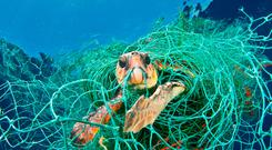 Undated handout photo issued by WWF of a Loggerhead turtle trapped in a drifting abandoned net in the Mediterranean Sea. Photo: Jordi Chias/WWF/PA Wire
