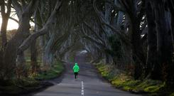 Attraction: A jogger runs along Bregagh Road in Armoy, Co Antrim, known as the Dark Hedges, which has become a popular tourist spot after being featured in 'Game of Thrones'