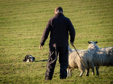Commissioner Hogan said it was unacceptable that only 6pc of the European Union's farmers are under 40 years of age.