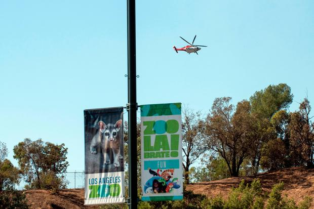 Fire helicopters fly over the hills the Los Angeles Zoo which was closed and briefly evacuated some animals due to the presence of a nearby wildfire, in Los Angeles, California, U.S. November 9, 2018. REUTERS/Andrew Cullen