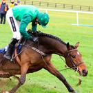 Hot favourite Footpad and Ruby Walsh about to part company at the final fence in Saturday's Poplar Chase at Naas. Photo: Alain Barr