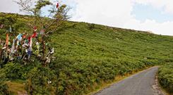 Someone cut down the faerie tree that used to be a marker where the magic road was near Mahon Falls