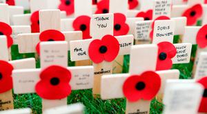 Poppies on wooden crosses in the Field of Remembrance at Royal Wootton Bassett. Photo: Andrew Matthews/PA Wire
