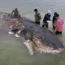 Washed ashore: The dead whale in Wakatobi, Indonesia