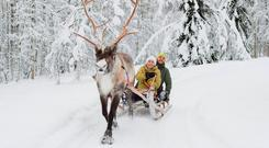 Good old days: At the moment, Lapland doesn't look like it usually does at this time of year