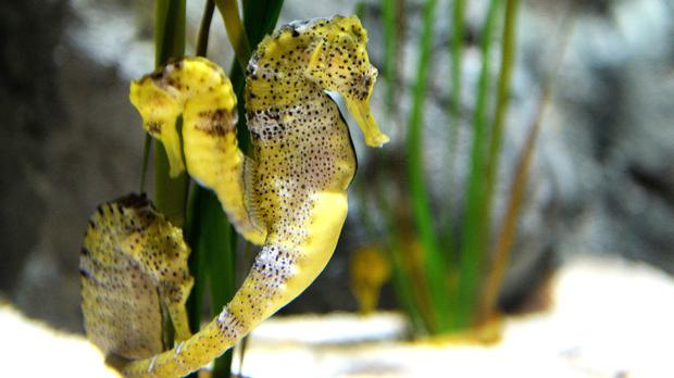 The seahorses have been named after the Strictly couple to remember their time in Blackpool (Dave Nelson/PA)