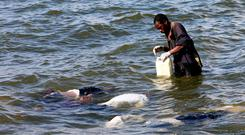 Grim duty: A volunteer retrieves the bodies of passengers from Lake Victoria. Photo: Reuters