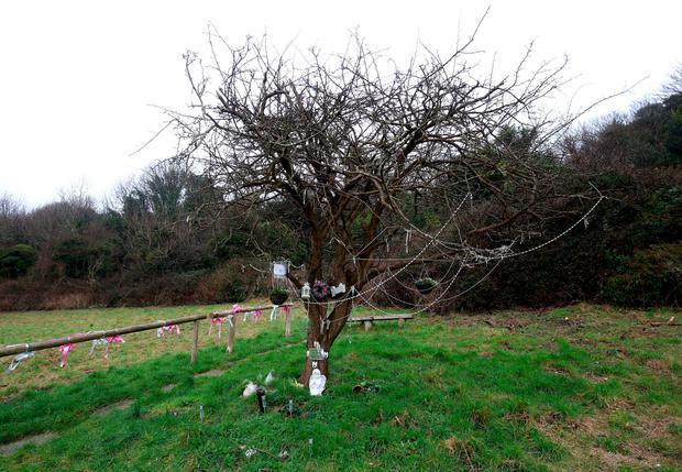 A memorial tree to Karen Hadaway and Nicola Fellows in Wild Park in Brighton, East Sussex. Photo: Gareth Fuller/PA Wire