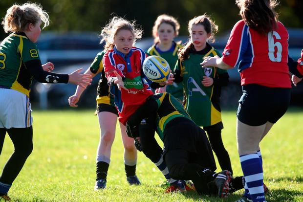 Mallow's minis section has increased as a result of the school programme