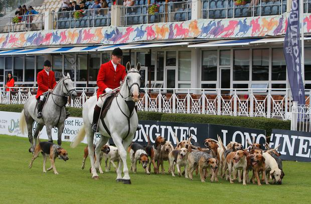 Parading the Tipperary Foxhounds at the RDS Dublin Horse Show.