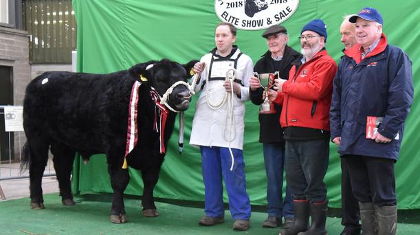 Tom Mullaney with Lavally Prince, Champion Bull