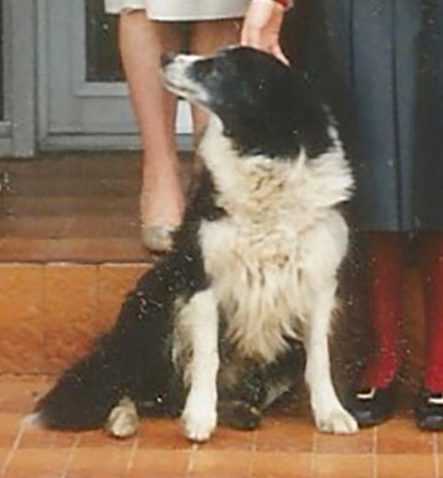 Dead: Lassie the dog was killed when Ted O'Donoghue opened fire