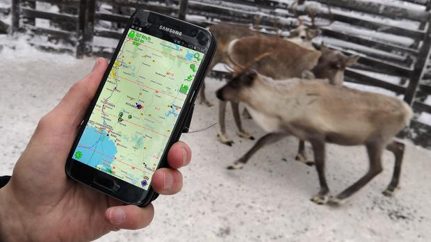 The mobile app used to locate reindeer in Finnish Lapland, in Rovaniemi, Finland (AP)