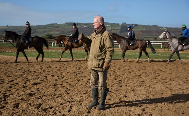 Willie Mullins watches his horses at their yard in Closutton where Wither or Which remains in situ at the age of 27. Photo: Tom Jenkins/Getty Images