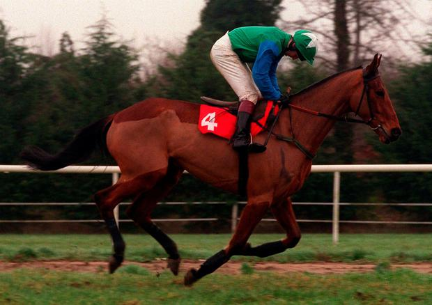 The horse won the bumper at Leopardstown when ridden and trained by Mullins back in 1995. Photo: Matt Browne/SPORTSFILE