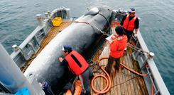 In this Sept. 2013, photo, a minke whale is unloaded at a port after a whaling for scientific purposes in Kushiro, in the northernmost main island of Hokkaido. Japan has announced it is leaving the International Whaling Commission to resume commercial hunts. Photo: AP