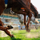Racing Australia described the images as 'horrific'. (stock picture)