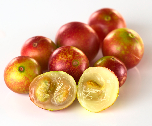 camu camu-a-a (Read-Only).png