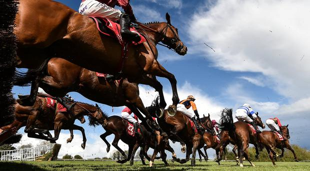 Sprinter or stayer? 'Speed gene' dictates horse's race potential