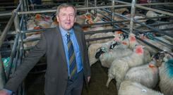 Minister for Agriculture Michael Creed in Kenmare Co-op Mart. Photo O'Gorman Photography