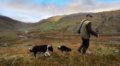 The GatheringSheep Farmer Stephen OSullivan, treking the hills of Glanrastel Valley, in the Caha Mountains, on the Beara Peninsula, Lauragh, Co Kerry ahead of scanning for this years lambing season.Photo:Valerie OSullivan