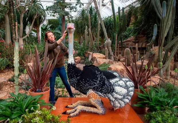 Emma Allen puts the finishing touches to one of 40 Lego sculptures going on display as part of the Great Brick Safari in the glasshouse at RHS Garden Wisley, which runs from January 26 to March 3. Credit: Steve Parsons/PA Wire