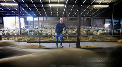 Philip Higgins pictured on his farm in Skreen, Co Sligo. Photo Brian Farrell