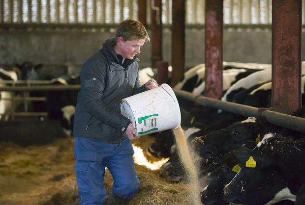 Pictured is Michael Kavanagh feeding his cows. Picture: Patrick Browne