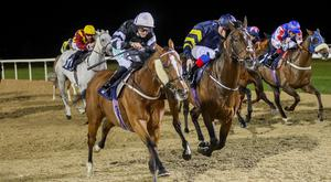 ENCOURAGING: Mudawwan can get his head in front at Newcastle today. Pic: Grossick Racing Photography