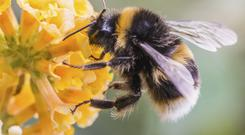 Danger: Bees are among the most threatened insect species. Stock picture