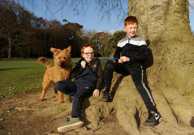 Park life: Cousins Riain Ledwidge (8, left) and Fionn Devine (9) with their dog Rua enjoy the good weather in St Anne's Park, Raheny, Dublin. Photo: Caroline Quinn