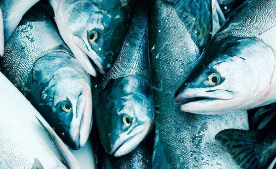 The Department of Agriculture in Ireland said it was unaware of any inspections into companies involved in farming Atlantic salmon being carried out here (stock photo)