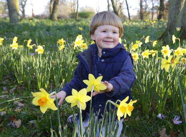 Spring is in the air: Louis Sinnott (3), from Glasnevin, enjoys himself in the Botanic Gardens, Dublin, yesterday. Photo: Damien Eagers