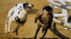 Magical Bale (9.57) can make his early pace count and he is taken to lead home Clonbrien and Droopys Davy (stock photo)