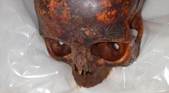 Found: One of the skulls stolen from St Michan's and recovered by gardaí.
