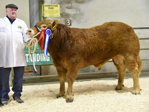 William Hogan of Gortnahoe, Thurles with the Reserve Champion, Oldtown Mossy, at the Limousin Cattle Society Show and Sale at Gort Mart