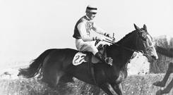 Cottage Rake and jockey Aubrey Brabazon take the final fence to win the Cheltenham Gold Cup in April 1949. Photo: Central Press/Hulton Archive/Getty Images