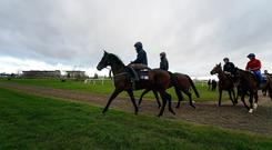 Apple's Jade, with David Condon up, leads the Gordon Elliott string onto the gallops at Cheltenham yesterday. Photo: Alan Crowhurst/Getty Images