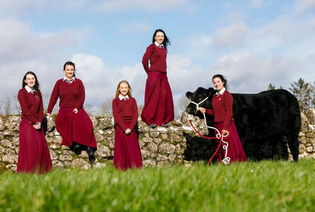 Pictured from left is, Emily Walsh, Aoibhinn Leahy, Jane McNamara, Susan O'Neill and Aishling O'Neill from Laurel Hill secondary school in Limerick City who were announced as winners of the 2019 Certified Irish Angus Beef Schools Competition created by Irish Angus Producer Group, ABP and Kepak.