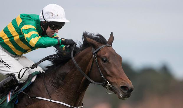 IRIAH BANKER: Sir Erec has been well fancied for the opening race at Cheltenham for a good while. Photo: Racing Post