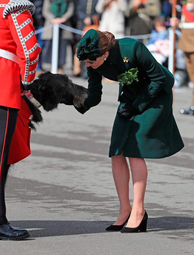 The Duchess of Cambridge strokes the Irish Guards mascot as she attends the St Patrick's Day parade at Cavalry Barracks in Hounslow, to present shamrock to officers and guardsmen of 1st Battalion the Irish Guards